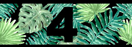 plant4